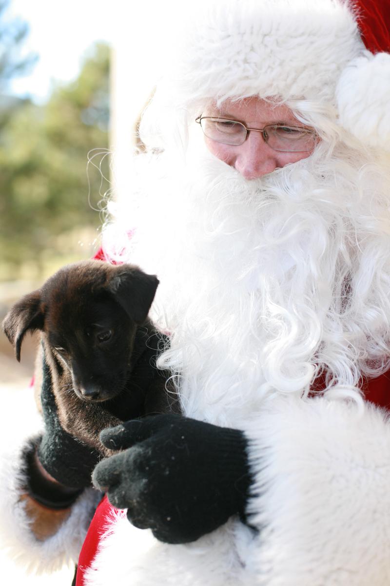 Photos with Santa Post-Event Wrap-Up – Fundraiser for EAPL | Family Photographer Evergreen Colorado